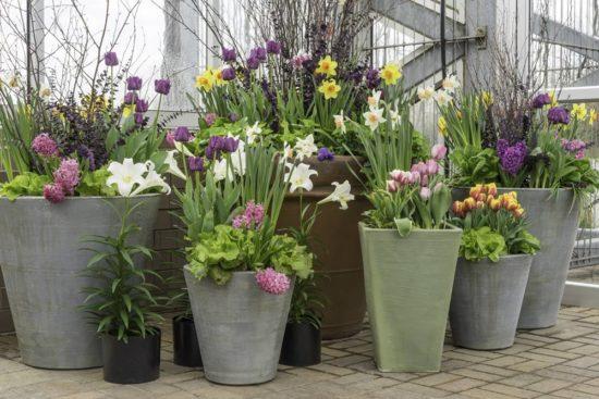 Blumentraum Pflanzendeko