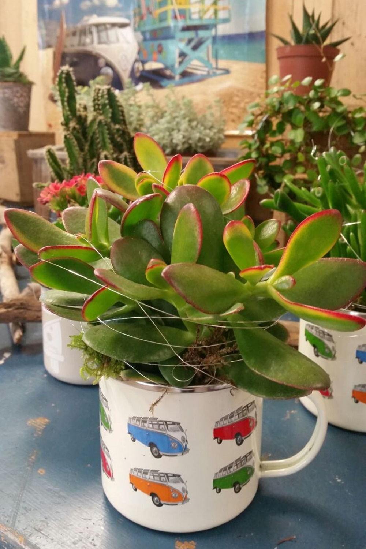 Zimmer Grunpflanzen Blumentraum Doris Rehrl Ihre Floristin Aus